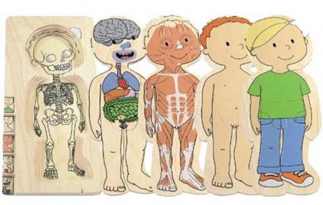 Twoje ciało-drewniane puzzle