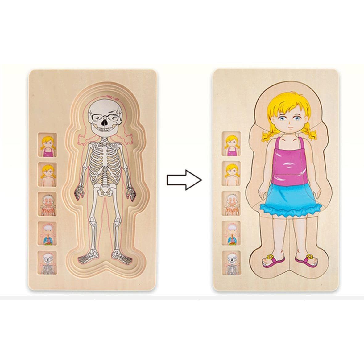 Seria ONSHINE: Puzzle warstwowe anatomia chłopiec i dziewczynka, tolerancja – kolory skóry